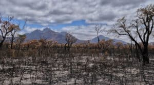 The devastating results of a bushfire in Australia.